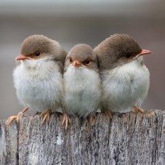 Alice et Loukiana donnent à manger aux oiseaux. Птички
