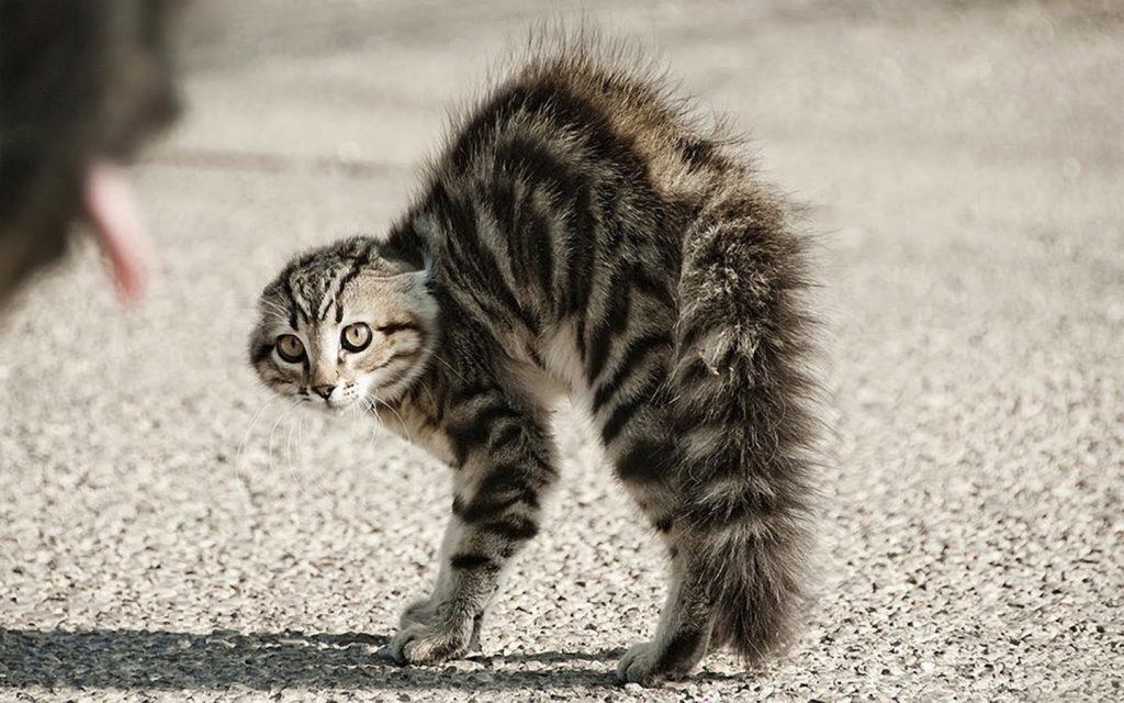 Photo de chat effrayé par les déclinaisons russes